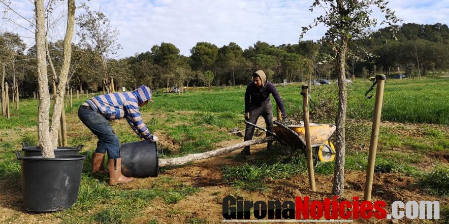 Diversos operaris realitzant les tasques de reposició d'arbres a Castell