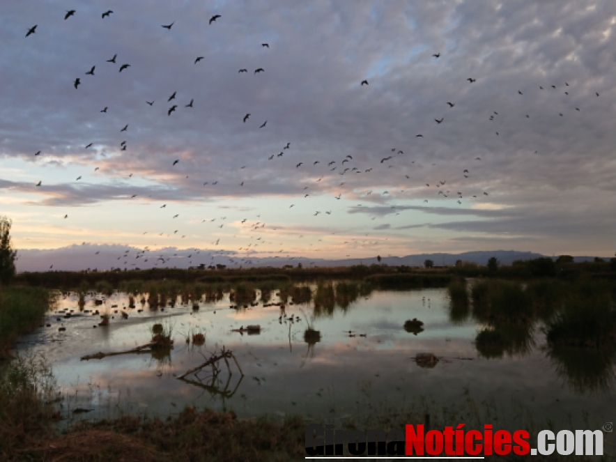 Ecosistema del Parque Natural Delta del Ebro