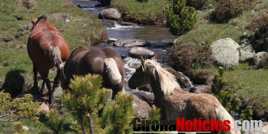 cavalls Bulloses